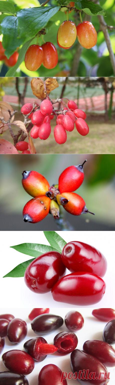 Самые необыкновенные фрукты со всего мира (часть 24)