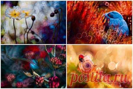 Волшебство макросъемки Магдалены Васичек | Улетные картинки