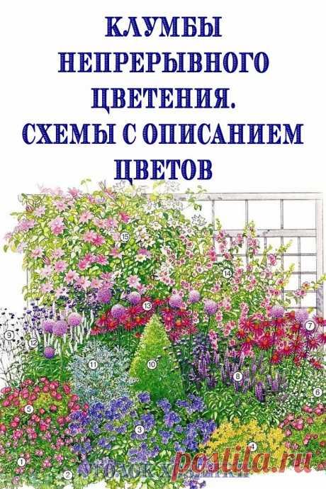 Практически каждый обладатель загородного участка мечтает о замечательном цветнике, который радовал бы своим цветением на протяжении всего теплого периода. Как же этого добиться?