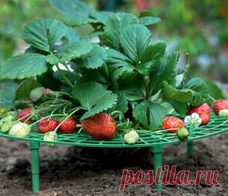 6 рецептов подкормки клубники весной для большого урожая.