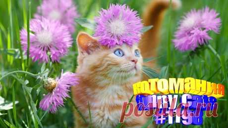 Любите смотреть приколы про котов? Тогда мы уверены, Вам понравится наше видео 😍. Также на котомании Вас ждут: видео кот,видео кота,видео коте,видео котов,видео кошек,видео кошка,видео кошки,видео о котах, видео про смешные, видео с кошками, для котов, котики смешные, кошка видео приколы, кошки прикол, приколы о кошек, про кошек смешное до слез, ролики про котов, смешное, смешные видео про кошек, смешные котики