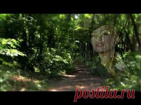 """Смотреть """"Великолепная мелодия.Автор и исполнитель Панин П А"""" или скачать бесплатно"""