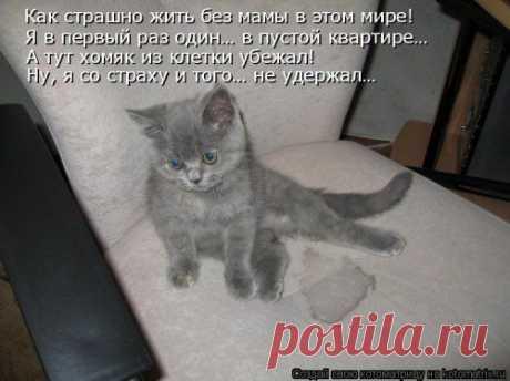 Новая котоматрица - ФОТОПОДБОРКА.