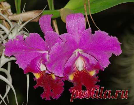 Царственный цветок