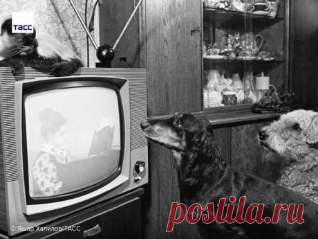 Счастливое детство в СССР: фото тех лет смотрю с ностальгией   Природа Северо-Запада   Яндекс Дзен