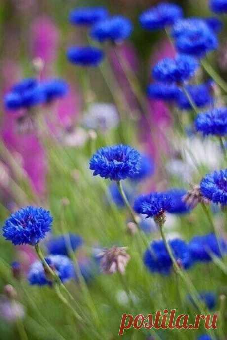 Сойду на станции «Июнь» И заблужусь в цветущем Лете, В его весёлом Многоцветье Под Музыку Травинок-струн....