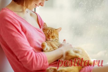 8 самых чувствительных места на теле у кошки. Погладьте их и увидите, что будет