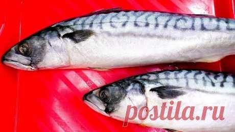 Обычная СКУМБРИЯ может удивить! Никогда еще не ела такой вкусной рыбы!