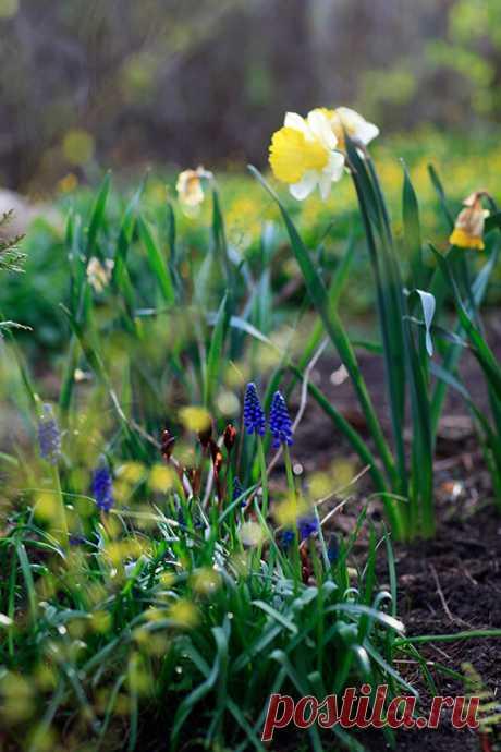 Секреты красивого сада. Сад живой! | Хюгге на шести сотках | Яндекс Дзен