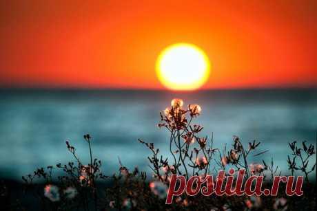 Оранжевое солнце садится в Черное море. Автор фото – Юлия Плеханова: nat-geo.ru/photo/user/333548/ Спокойной ночи!