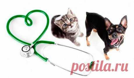 """Інформаційний портал - Ветеринарний кардіологічний консультаційний центр"""""""