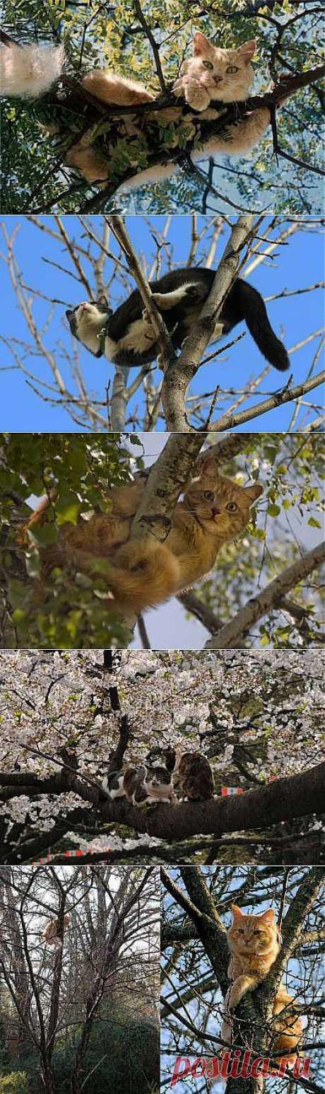 Весна!Коты прилетели!Весенняя котомания))) - 1 Марта 2014 - Наша Планета.Мир вокруг нас