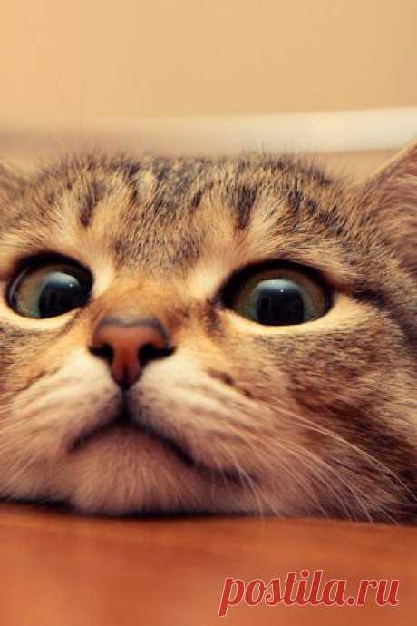(+1) - Какую пользу может принести кот   Четвероногий юмор