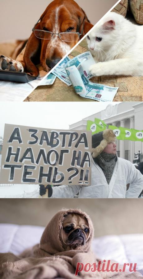 Налог на домашних животных в России в 2020 году. Моё мнение | PetZona.Ru | Яндекс Дзен