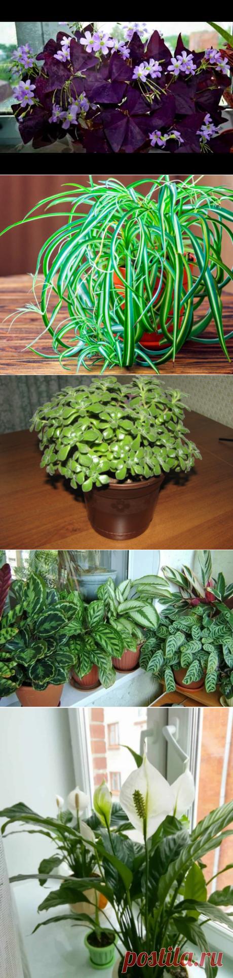 Комнатные растения и связанные с ними приметы