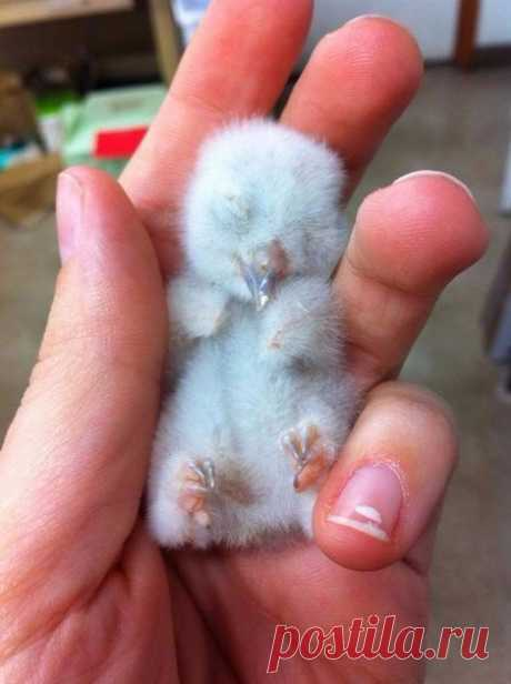 The newborn owlet wishes you kind morning!