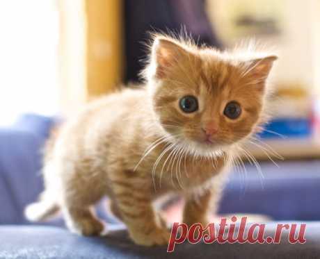 Первые шаги котёнка в вашем доме | PetTips