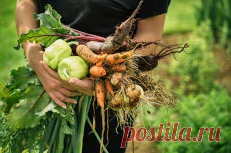 Когда и чем подкормить овощи для богатого урожая / Домоседы
