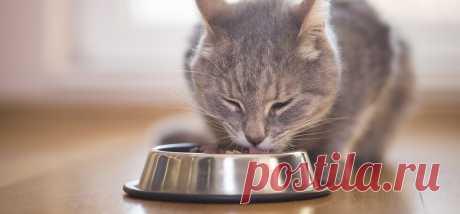 Смешанное кормление кошек - польза или вред?