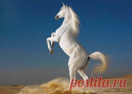 Прекрасные фотографии лошадей