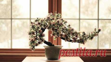 Фэн-шуй для растений