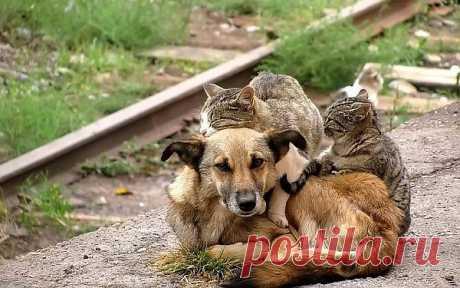 ТЫ НЕ БРОСАЙ в собаку камень... Пусть это лишь бездомный пес... Ведь ОН и так.... ДО БОЛИ РАНЕН! Хоть и не знает ГОРЬКИХ СЛЁЗ.... НАМ до СОБАК...ЕЩЁ РАСТИ, чтоб вровень встать с их БЛАГОРОДСТВОМ... А им... вовек не доползти до ЧЕЛОВЕЧЕСКОГО СКОТСТВА.