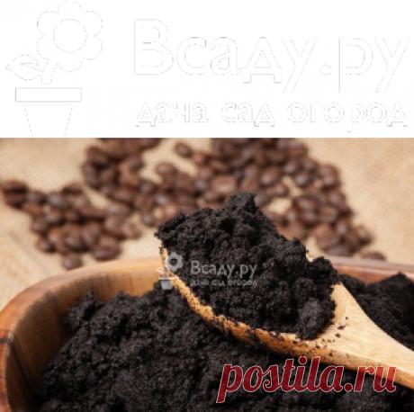 Применение кофе в саду, огороде, рецепты подкормки Польза и вред кофе для растений, как правильно подготовить кофейную гущу, применение кофе в саду. Рецепты подкормки сухим кофе и кофейным раствором