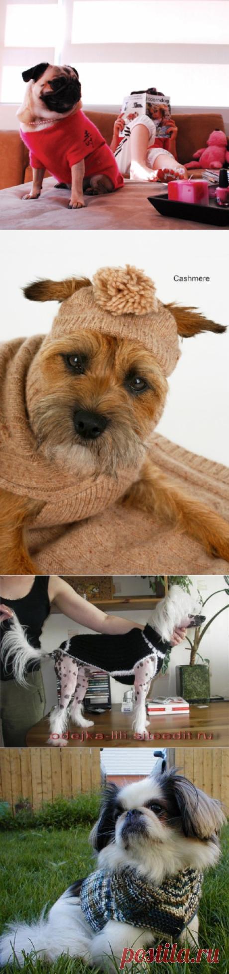Вязаная одежда для собак. Полезные советы, статьи и сайты