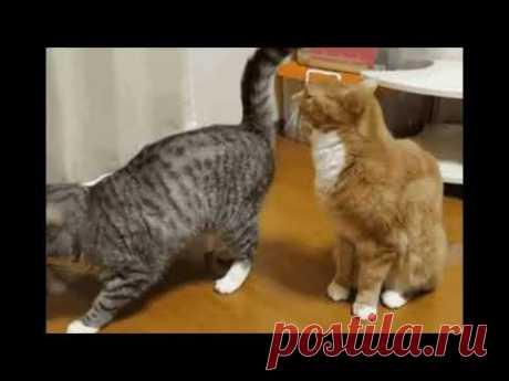 ПРИКОЛЫ - СМЕШНЫЕ КОТЫ И КОШКИ.ПОДБОРКА #1/Funny Cats Complation