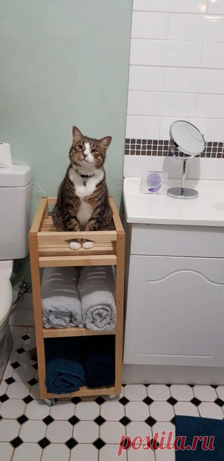 Три вещи, на которые кошки готовы смотреть вечно. 20 уморительных фото. | Прогулки в прошлое. | Яндекс Дзен
