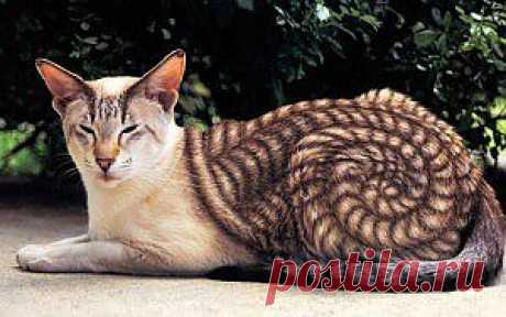 Новое увлечение богачей. Коты и кошки, раскрашенные во все цвета радуги./Мой женский мир (автор Ирина)