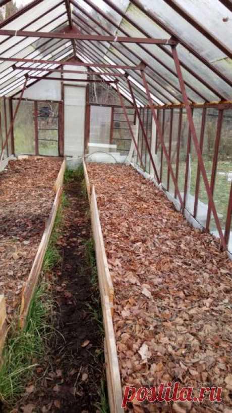 Осень 2017. Основное осеннее мульчирование и укрывка виноградных кустов под зиму
