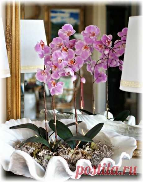 Орхидея в интерьере: 35 идей для вашего дома ~ ALL-DEKOR.RU