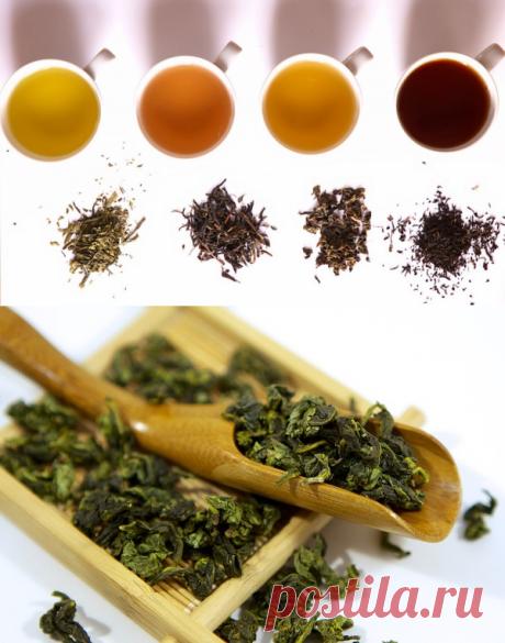 Лучшие сорта чая для снижения веса — Всегда в форме!