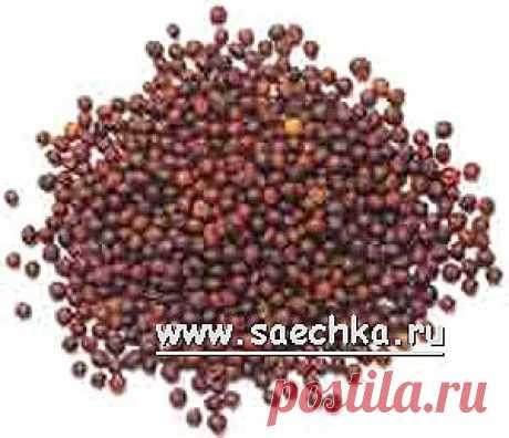 Горчица черная (французская, настоящая) | Saechka.Ru - рецепты с фото