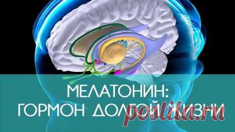 МЕЛАТОНИН-ЗАЛОГ ДОЛГОЛЕТИЯ  Что делать, чтобы увеличить выработку мелатонина? Конечно, вы слышали о гормоне сна — мелатонине. Его также называют гормоном жизни и долголетия. Мелатонин не только производится в организме, он также поступает из некоторых продуктов или его можно вводить в организм в виде лекарств и добавок. Как производится мелатонин? Мелатонин продуцируется эпифизом (шишковидная железа). Под действием солнечного света триптофан-аминокислота превращается в сер...