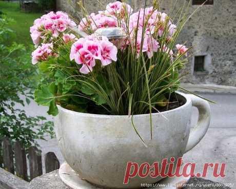 Копеечный СТИМУЛЯТОР РОСТА для цветов