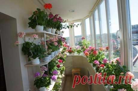 Балконная оранжерея