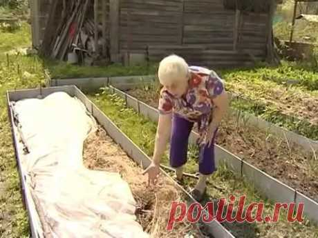 Огород для лентяя который не копают Все Секреты. Галина Кизима - YouTube