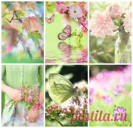 Живи, сохраняя покой. Придёт весна, и цветы распустятся сами.  = Китайская пословица =