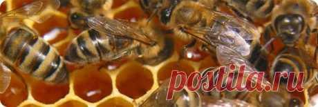Мёд является одним из самых полезных продуктов. Это мощное средство профилактики и лечения множества заболеваний. В древности мед настолько был ценным продуктом, что его использовали для оплаты вместо золота.   Мед обладает замечательными вкусовыми качествами и является единственным натуральным подсластителем, не требующим очищения и обработки. Мед обладает лечебными, антибактериальными, диетическими, общеукрепляющими, противовоспалительными свойствами. Полезные свойства м...