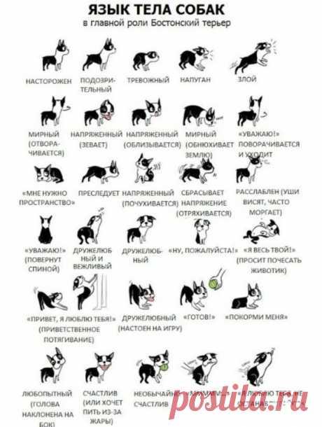 Как понять собачий язык без переводчика
