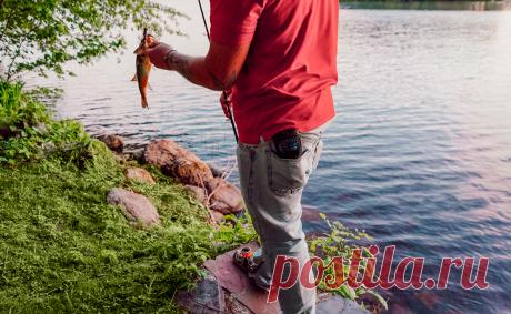Комары отступают: как избавиться от насекомых на рыбалке .
