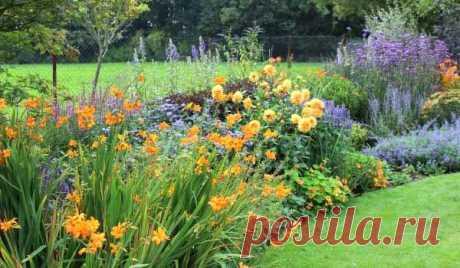 El parterre que florece todo el verano: que flores plantar