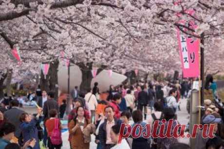 Почему в Японии все хорошо а у нас все плохо » Notagram.ru Поучительная история японской модели менеджмента. О том, как работают простые люди и начальство в Японии. Почему в Японии сразу увольняют начальство.