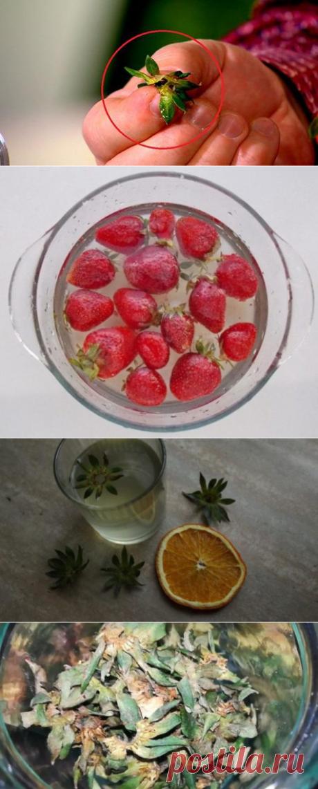 Сушеные хвостики от клубники намного дороже ,чем сама ягода, а многие этого не знают. Рассказываем почему - be1issimo.ru