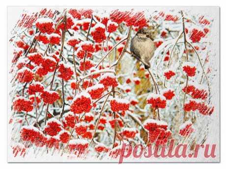 Что там за ягода алеет, Когда уже прохладой веет И осень мчит на всех парах, Сметая листья во дворах? Она еще горчит и вяжет… Но только снег на землю ляжет, Мороз ударит не слегка И льдом покроется река: Она уже на вкус иная… И птицы, будто понимая, Клюют замерзшие дробины Зимой алеющей рябины.