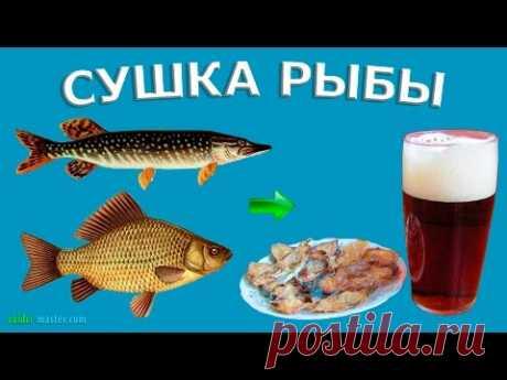 Сушка рыбы: карась и щука