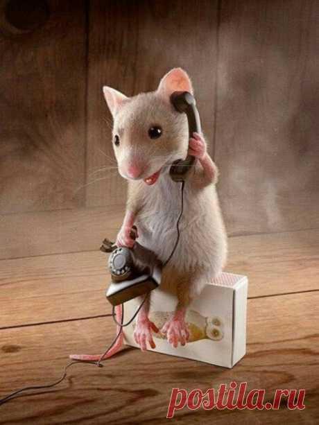 2020 — год Белой Металлической Крысы: каким он будет?