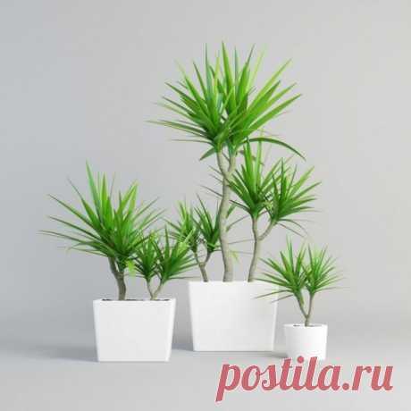8 лучших комнатных растений-фильтров. Какие растения лучше очищают воздух? Список, фото - Ботаничка.ru - Страница 8